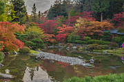 Japanese Garden Posters - Soaring Fall Colors in the Arboretum Poster by Mike Reid