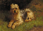 Alfred Duke - Soft Coated Wheaten Terrier