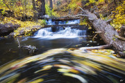 Payson Prints - Spinning Autumn Print by Peter Coskun