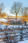 Split Rail Fence Prints - Split Rail Winter Print by Steve Harrington