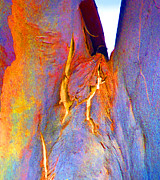 Colored Bark Posters - Spring Eucalypt Abstract 3 Poster by Margaret Saheed