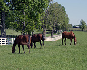 Kentucky Horse Park Paintings - Spring Paddock by Roger Potts