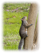 Barry Jones - Squirrel Climbing