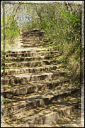 Wooden Stairs Digital Art Prints - Stair Steps In the Forest Print by Ella Kaye