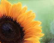 Flower Photos Prints - Staring Into the Sun Print by Amy Tyler