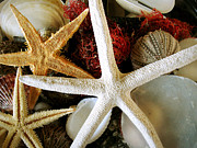 Beach Decor Photos - Stars of the Sea by Colleen Kammerer
