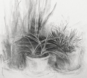 Potted Drawings Metal Prints - Still Life With Zebra Plant Metal Print by Steve Dininno