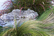 Green Burgandy Posters - Stones with Flowing Grass Poster by Linda Phelps