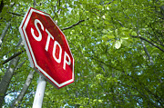 Traffic Control Photo Posters - Stop in forest Poster by Deyan Georgiev