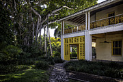 Lynn Palmer - Strangler Fig and Plantation Home