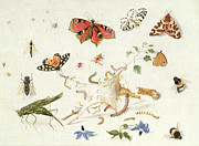 Reptiles Painting Prints - Study of Insects and Flowers Print by Ferdinand van Kessel