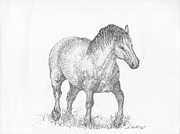 Agriculture Drawings Posters - Suffolk Punch Draft Horse Poster by J E Vincent