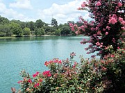 Florida Flowers Photos - Summer Day at the Lake by Annette Allman