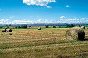 Crop Painting Prints - Summer Hay 2 Print by Terry Reynoldson