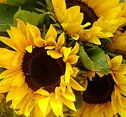 Amy Vangsgard - Sunflowers