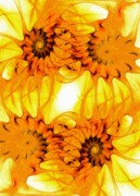 Beautiful Abstracts Posters - Sunflowers Poster by Anastasiya Malakhova