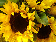 Sunflowers Digital Art - Sunflowers Wide by Amy Vangsgard