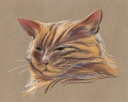 Animals Pastels Framed Prints - Tabby Cat Portrait in Pastels Framed Print by MM Anderson