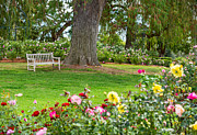 Contemplate Art - Take a Seat - beautiful Rose Garden of the Huntington Library. by Jamie Pham