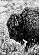 American Bison Drawings Prints - Tatanka Print by Lori Discoe