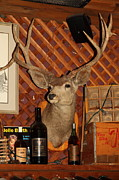 Cellar Posters - Taxidermy Deer In The Cellar Room At the Swiss Hotel Sonoma California 5D24453 Poster by Wingsdomain Art and Photography