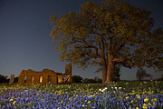 Moonlit Scene Prints - Texas Blue Bonnets at Night Print by Keith Kapple