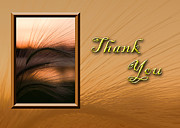 Jeanette Kabat - Thank You Grass Sunset