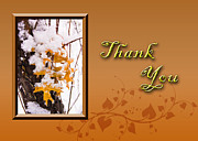 Jeanette Kabat - Thank You Leaves