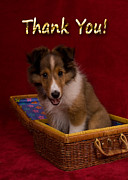 Jeanette Kabat - Thank You Sheltie Puppy