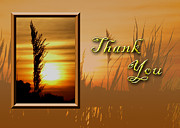 Jeanette Kabat - Thank You Sunset