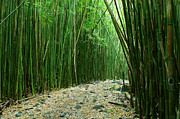 Bamboo Forest Framed Prints - The Bamboo Forest Framed Print by Bob Christopher