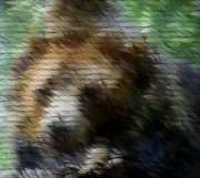 Paint Photograph Mixed Media Prints - The Bear Print by Sean McDaniel