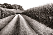 Small Photo Framed Prints - The Corn Road Framed Print by Olivier Le Queinec
