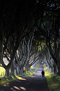 Dark Hedges Prints - The Dark Hedges Print by Sharon Sefton