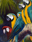 Blue And Gold Macaw Prints - The Feisty One Print by Billie Colson