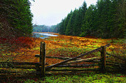 Vancouver Island Originals - The Gate by Lawrence Christopher