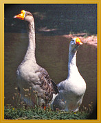 Patricia Keller Posters - The Goose and The Gander Poster by Patricia Keller