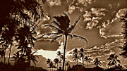 Cheryl Young - The Islands Sepia