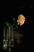 Flower Still Life Prints Posters - The Last Rose Of Summer Poster by Theresa Tahara