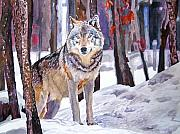 Timber Wolf Framed Prints - The Lone Wolf Framed Print by David Lloyd Glover