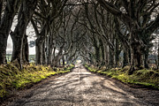 Dark Hedges Prints - The Long Road Ahead Print by Andy Gibson