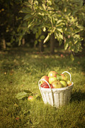 Green Apples Posters - The Orchard Poster by Christopher and Amanda Elwell