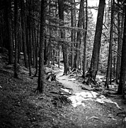 Tree Roots Photo Posters - The Path Poster by Aaron Aldrich