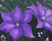 Hybrid Paintings - The President Clematis by Sharon Duguay