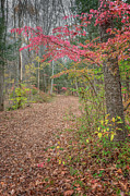 Autumn Scenes Metal Prints - The Psychedelic Forest Metal Print by Bill  Wakeley