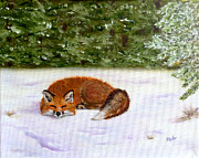 Dr Pat Gehr - The Red Fox of Winter