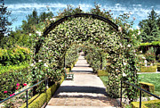 Cindy Nunn - The Rose Arch