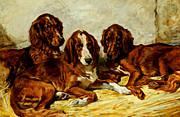 John Emms - Three Irish Red Setters
