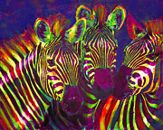 Zebra Metal Prints - Three Rainbow Zebras Metal Print by Jane Schnetlage