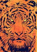 Pop Drawings Framed Prints - Tiger Framed Print by Giuseppe Cristiano